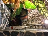 010 軌道燈投射燈工程設計製作LED燈魚池假山照明攝影燈光:軌道燈投射燈工程設計製作LED燈魚池假山照明攝影燈光00176.jpeg