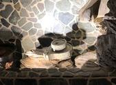 010 軌道燈投射燈工程設計製作LED燈魚池假山照明攝影燈光:軌道燈投射燈工程設計製作LED燈魚池假山照明攝影燈光00186.jpeg