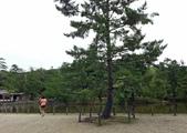 695奈良東大寺 南大門 大佛殿 世界最大木建築:奈良東大寺049南大門大佛殿吉他家施夢濤老師.jpg