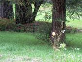534 武陵農場 櫻花鉤吻鮭 七家灣溪:00171武陵農場櫻花鉤吻鮭七家灣溪.jpg