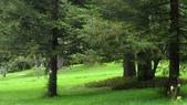 534 武陵農場 櫻花鉤吻鮭 七家灣溪:00168武陵農場櫻花鉤吻鮭七家灣溪.jpg