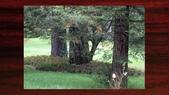 534 武陵農場 櫻花鉤吻鮭 七家灣溪:00081武陵農場櫻花鉤吻鮭七家灣溪.jpg