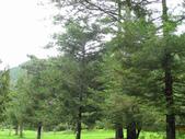 534 武陵農場 櫻花鉤吻鮭 七家灣溪:00169武陵農場櫻花鉤吻鮭七家灣溪.jpg