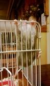 654三線鼠短尾侏儒倉鼠倉鼠科:00041三線鼠短尾侏儒倉鼠倉鼠科.jpg