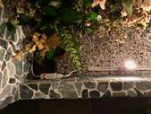 010 軌道燈投射燈工程設計製作LED燈魚池假山照明攝影燈光:軌道燈投射燈工程設計製作LED燈魚池假山照明攝影燈光00174.jpeg