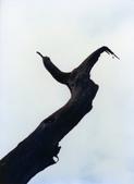 012 Taiwan landscap台灣風情畫吉他家施夢濤攝影作品Guitarist Albert:Taiwan landscap台灣風情畫028吉他家施夢濤 (1).jpg