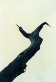 012 Taiwan landscap台灣風情畫吉他家施夢濤攝影作品Guitarist Albert:Taiwan landscap台灣風情畫028吉他家施夢濤 (2).jpg