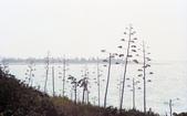 012 Taiwan landscap台灣風情畫吉他家施夢濤攝影作品Guitarist Albert:Taiwan landscap台灣風情畫050吉他家施夢濤 (5).jpg