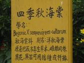 534 武陵農場 櫻花鉤吻鮭 七家灣溪:00148武陵農場櫻花鉤吻鮭七家灣溪.JPG