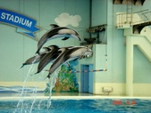 060629-日本行:海豚秀