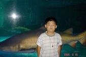 060629-日本行:剛好游過來一隻鯊魚