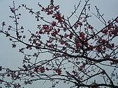 060107-天長&二子山:DSC03061