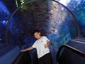 060629-日本行:水族館