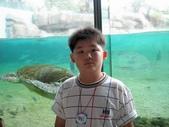 060629-日本行:海龜