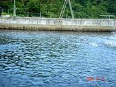 051015-武陵農場與力行產業道路:養殖場(有香魚,鳟魚,潯龍魚喔)