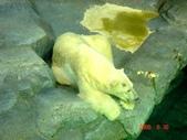 060629-日本行:還有北極熊