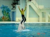060629-日本行:小白鯨表演