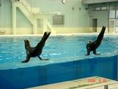 060629-日本行:海豹表演
