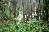 051029-杉林溪迷霧森林:有名的迷霧森林,還真是漂亮啊!