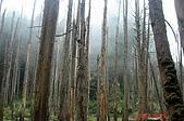 051029-杉林溪迷霧森林:有人說這是台灣版的九寨溝喔!