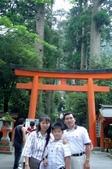 060629-日本行:背後整齊的神木