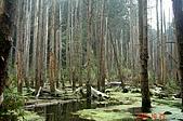 051029-杉林溪迷霧森林:這是颱風造成的掩塞湖啦