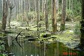 051029-杉林溪迷霧森林:DSC02648