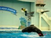 060629-日本行:鯨魚表演