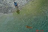 061028-砂卡噹步道與天長隧道:游泳的狗狗
