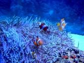 060629-日本行:小丑魚