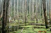 051029-杉林溪迷霧森林:DSC02654