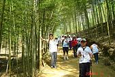 061111-南投梯子吊橋:竹林