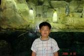 060629-日本行:參觀水族館