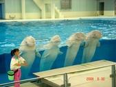 060629-日本行:四隻可愛的白鯨