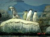 060629-日本行:可愛的企鵝