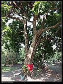 2010-12-05屏東回憶之旅:P1060052.jpg