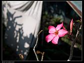 2010-12-05屏東回憶之旅:P1060056.jpg
