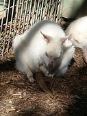 嬉梨~耍寶三姐妹圍繞三寶:DSC03857.JPG