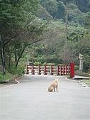 烏來璞石渡假去~:DSC04988.JPG