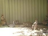 嬉梨~耍寶三姐妹圍繞三寶:DSC03771.JPG