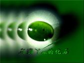 網誌用的圖片:DSCN1090~1.jpg