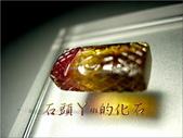 網誌用的圖片:DSCN2037.JPG