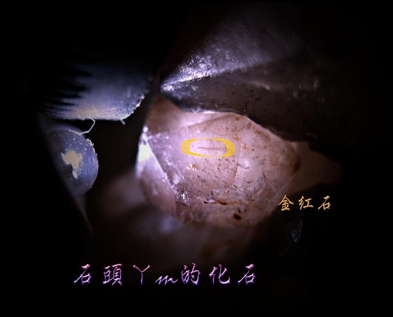 網誌用的圖片:DSCN1613~1.jpg