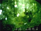 網誌用的圖片:DSCN0895~1.jpg