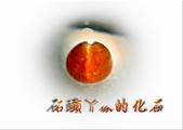 網誌用的圖片:DSCN1110~2.jpg