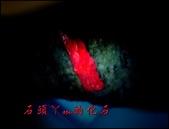 網誌用的圖片:DSCN1614~1.jpg