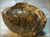 網誌用的圖片:DSCN9937.JPG
