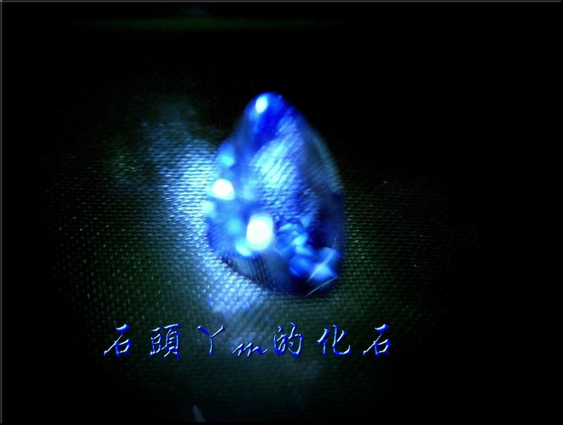 網誌用的圖片:DSCN0702~1.jpg