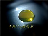 網誌用的圖片:DSCN1480~1.jpg