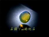 網誌用的圖片:DSCN1426~1.jpg